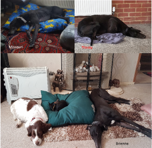 Jan_Homed_Hounds